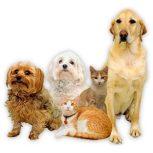 Kutyaruha és kutyaborotva